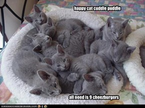 Happy Cat cuddle puddle