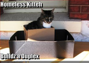 Homeless Kitteh  Buildz a Duplex