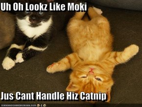Uh Oh Lookz Like Moki  Jus Cant Handle Hiz Catnip