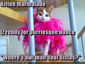 "Kitteh Marmalade Iz reddy for purrlesque dance ""Where's awl mah soul sistas?"""