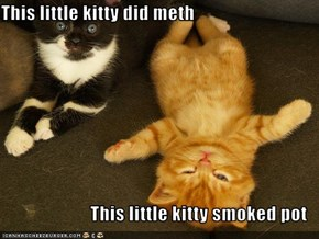 This little kitty did meth  This little kitty smoked pot