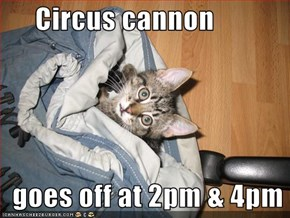 Circus cannon    goes off at 2pm & 4pm