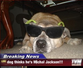 Breaking News - dog thinks he's Michal Jackson!!!