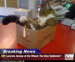 Breaking News - LoLCats Asleep at the Wheel: The New Epidemic?