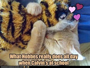 What Hobbes really does all day when Calvin's at school