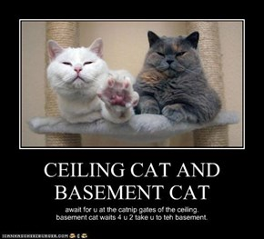 CEILING CAT AND BASEMENT CAT