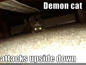 Demon cat  attacks upside down