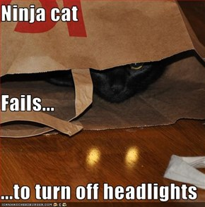 Ninja cat Fails... ...to turn off headlights