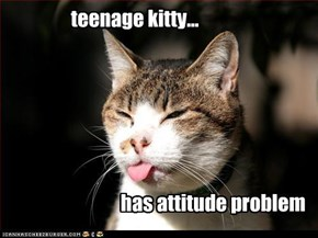 teenage kitty...                                                                                                 has attitude problem