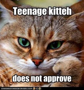 Teenage kitteh