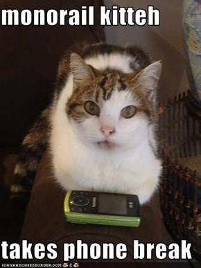 monorail kitteh  takes phone break