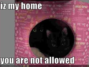iz my home  you are not allowed