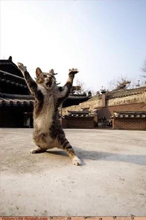 Kitty Kung Fu