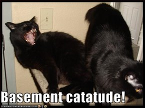Basement catatude!