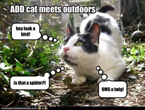 ADD cat meets outdoors