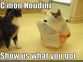 C'mon Houdini  Show us what you got