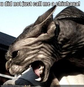 u did not just call me a chiuhaua!