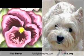 This flower Totally Looks Like This dog