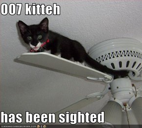 007 kitteh  has been sighted