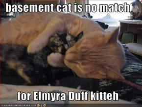 basement cat is no match   for Elmyra Duff kitteh