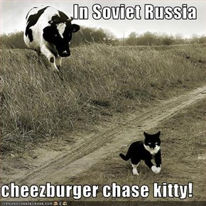 In Soviet Russia  cheezburger chase kitty!