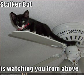 Stalker Cat  is watching you from above