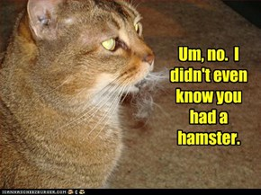 Um, no.  I didn't even know you had a hamster.