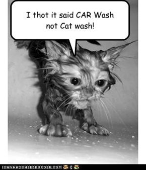 I thot it said CAR Wash not Cat wash!