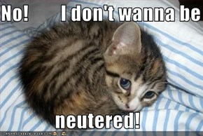 No!        I don't wanna be  neutered!