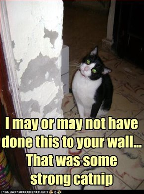 I may or may not have done this to your wall... That was some strong catnip