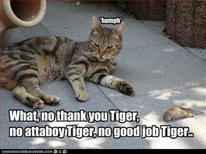 What, no thank you Tiger,  no attaboy Tiger, no good job Tiger..