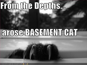 the basement cat