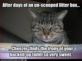 After days of an un-scooped litter box...