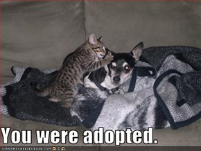 You were adopted.
