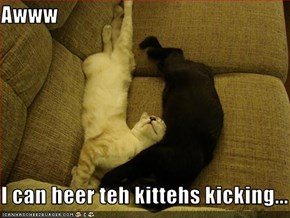 Awww  I can heer teh kittehs kicking...