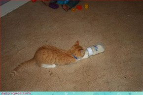 Kitty with a bottle