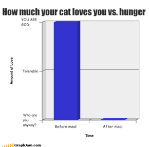 How much your cat loves you vs. hunger