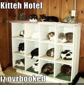 Kitteh Hotel  iz ovrbooked