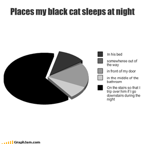 Places my black cat sleeps at night