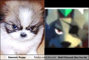 Demonic Puppy Totally Looks Like Wolf O'Donnell (Star Fox 64)