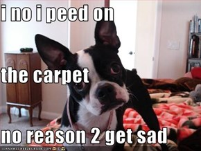 i no i peed on the carpet no reason 2 get sad