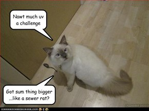 Nawt much uv a challenge