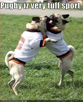 Pugby iz very tuff sport.