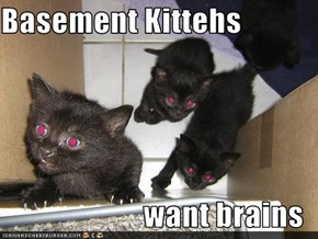 Basement Kittehs  want brains