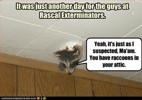 It was just another day for the guys at Rascal Exterminators.