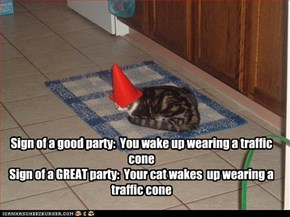 Sign of a good party:  You wake up wearing a traffic cone Sign of a GREAT party:  Your cat wakes  up wearing a traffic cone