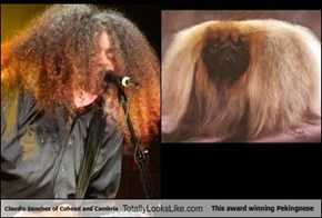 Claudio Sanchez of Coheed and Cambria Totally Looks Like This award winning Pekingnese
