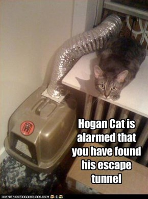 Hogan Cat is alarmed that you have found his escape tunnel