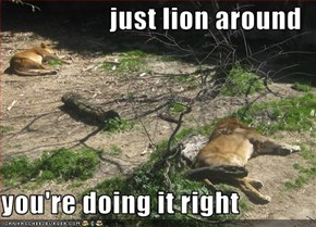 just lion around  you're doing it right