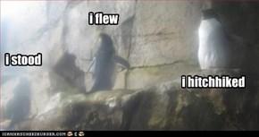 caesar penguins